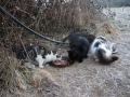 Chats nourris