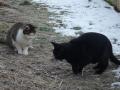Juste et un chat