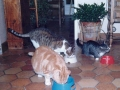 Julie, Titi et Bisou