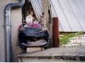 Les chats du toit à Chassignelles