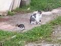 Gackowa et son chaton
