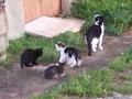 Mimi et ses chatons