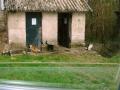 Hôtel des chats