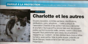 Article Atout Chat