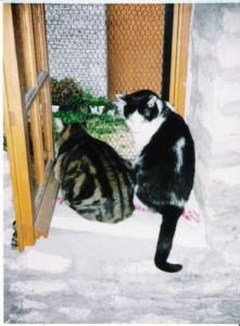 Chats - Laura et Maxime