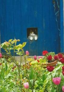 Chatte Poupée dans sa cabane