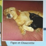 Choucrette (avec le chien Figon)