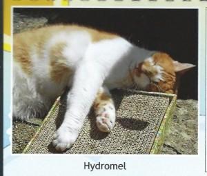 Hydromel